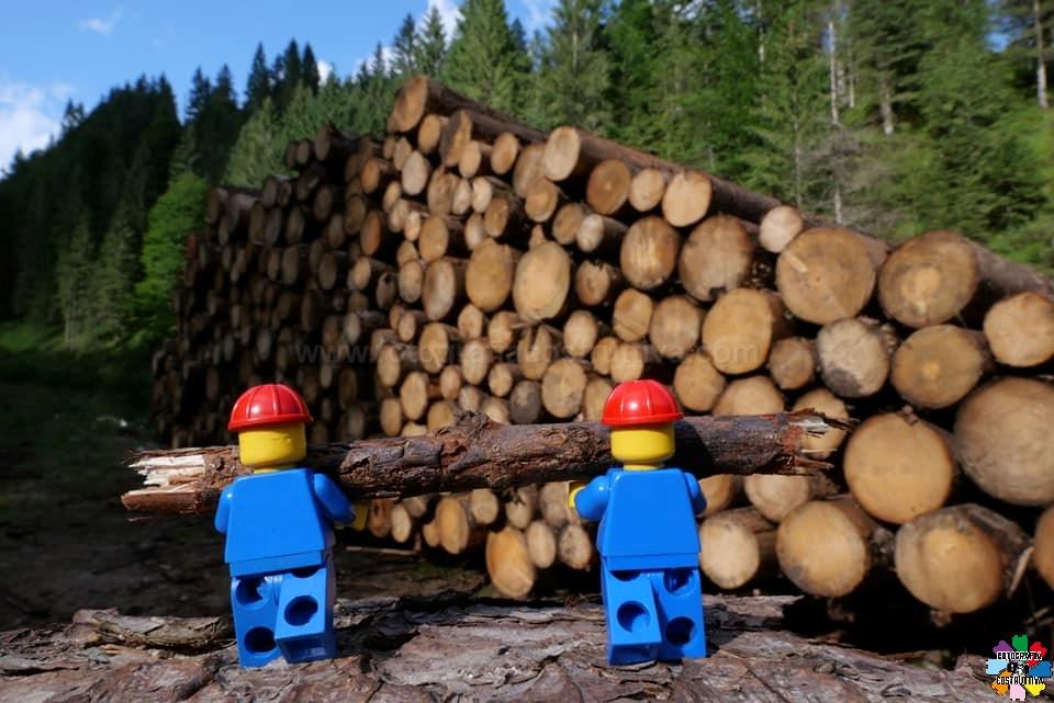 03-08-2019 Marco Bazzo 64 si lavora alacremente per recuperare il legname. 1