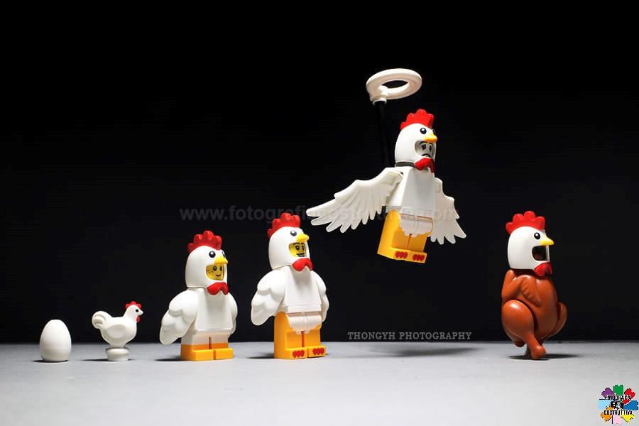 15-09-2019 Thong YH 58 Ciclo di vita del pollo
