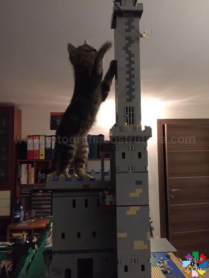 09-11-2019 Lorenzo Battaglieri 97 Cat Kong alle prese con lo scheletro appeso alla catena...torre distrutta!