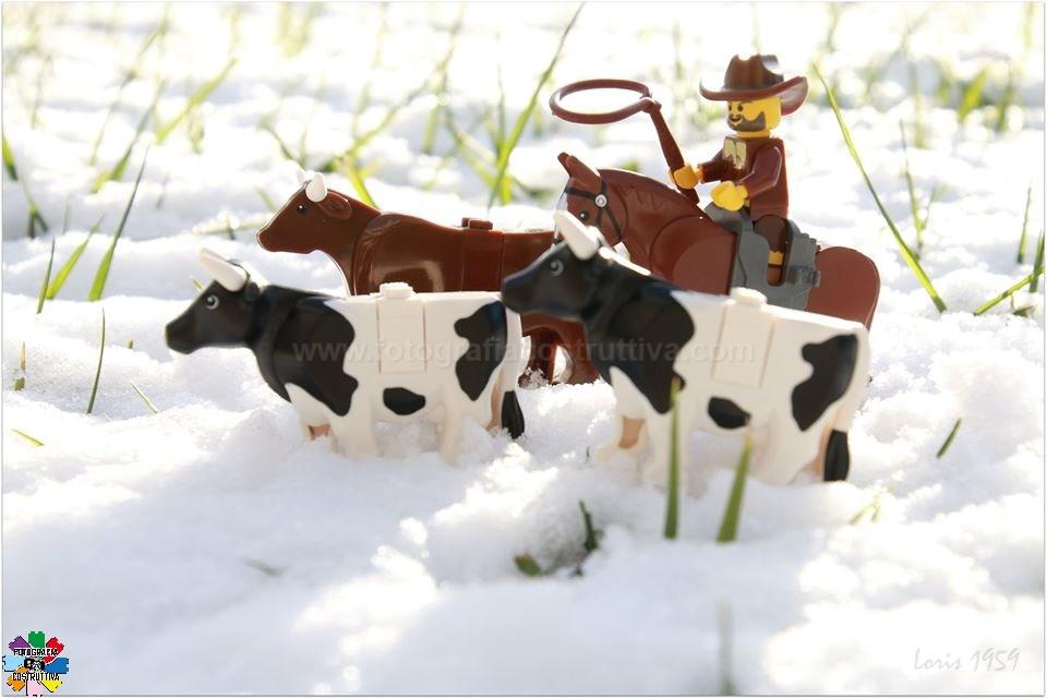 14-12-2019 Susanna Loris Lorandi 76 È arrivata la neve, è ora di portare a valle la mandria!