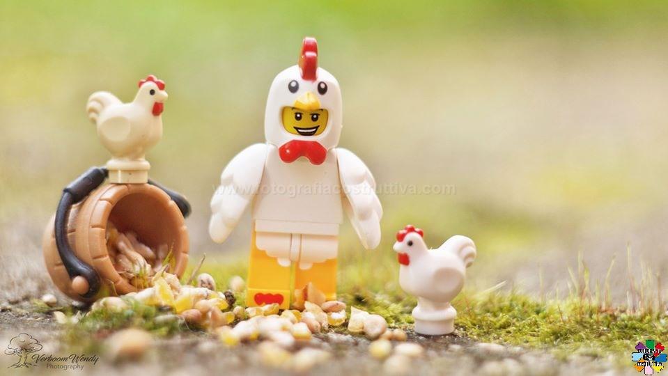 18-02-2020 Wendy Verboom 55 Chickens Polli