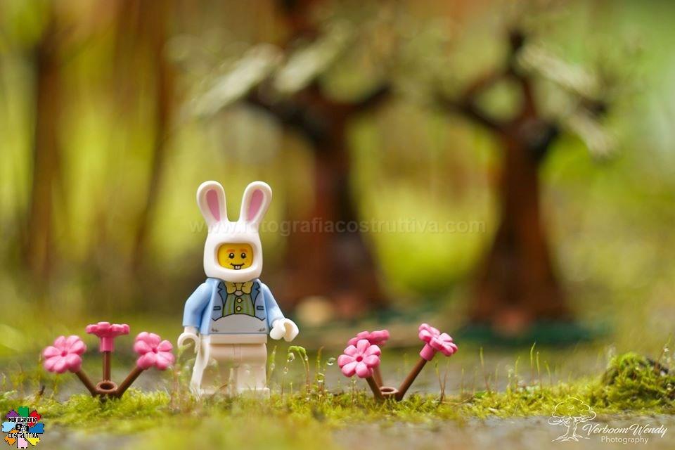 05-03-2020 Wendy Verboom 52 Mr. Rabbit
