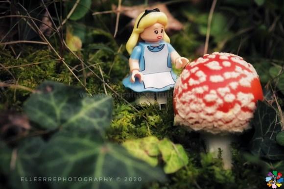 30-10-2020 Laura Rabachin 55 Ma sarà questo il fungo giusto... Mi farà diventare grande